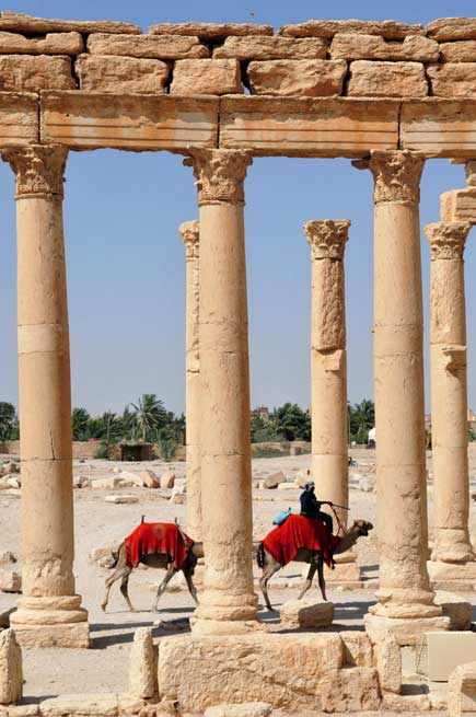 Camels walk past the ruins of Palmyra