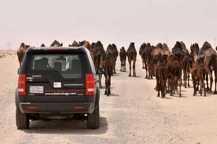 Ali stuck behind camels - May 23